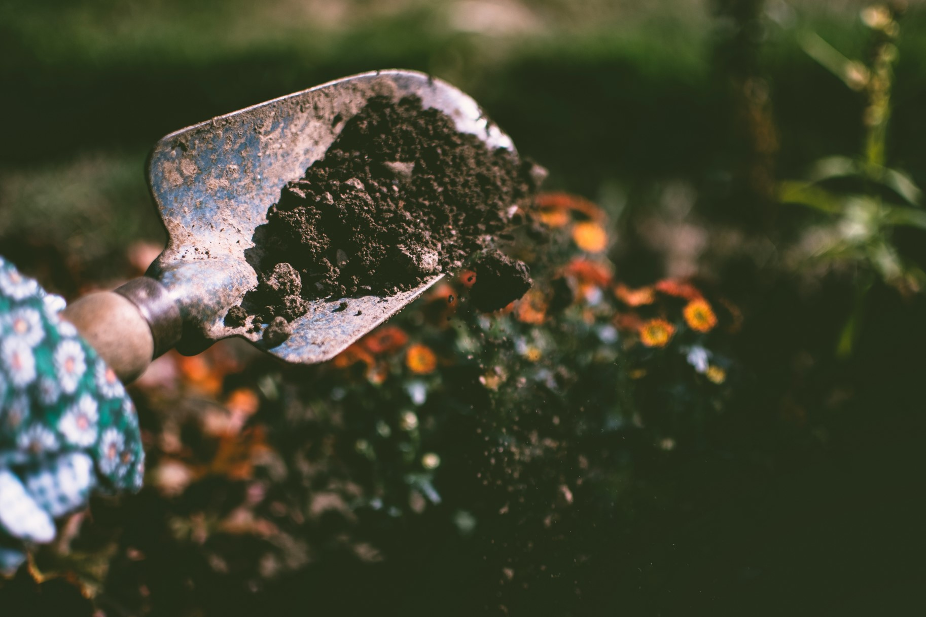 gardening with mushroom compost