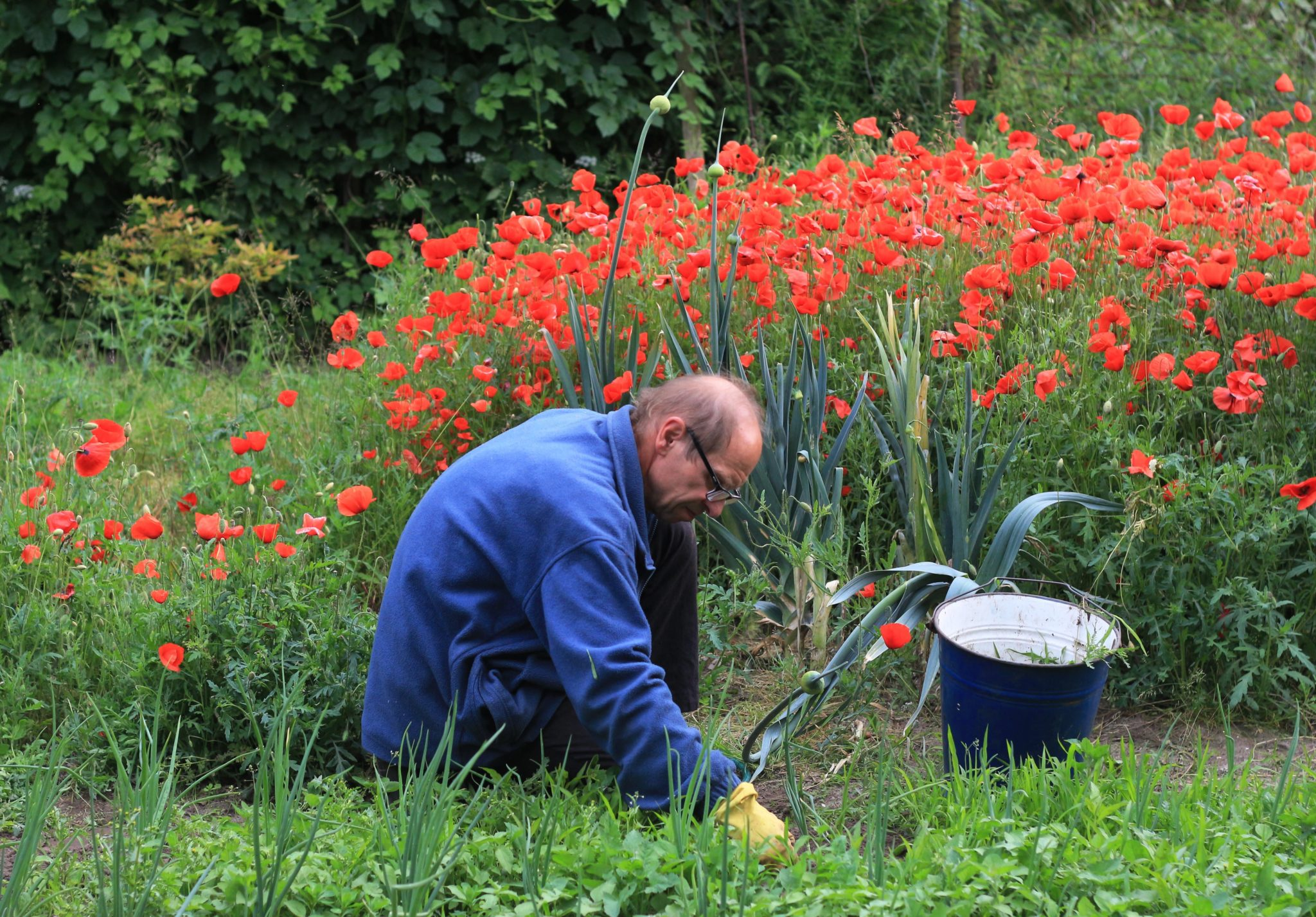 tips for preventing weeds - man kneeling down weeding landscape