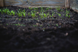 what you need to know about topsoil